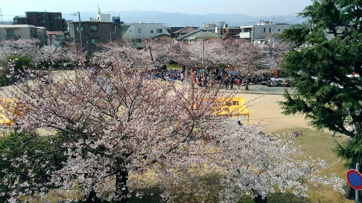 あすか塾甲子園校3階の窓からの桜